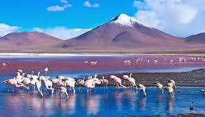 Vận chuyển hàng hóa sang Bolivia bằng đường biển