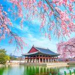 Chuyển phát nhanh từ Cần Thơ đi Hàn Quốc