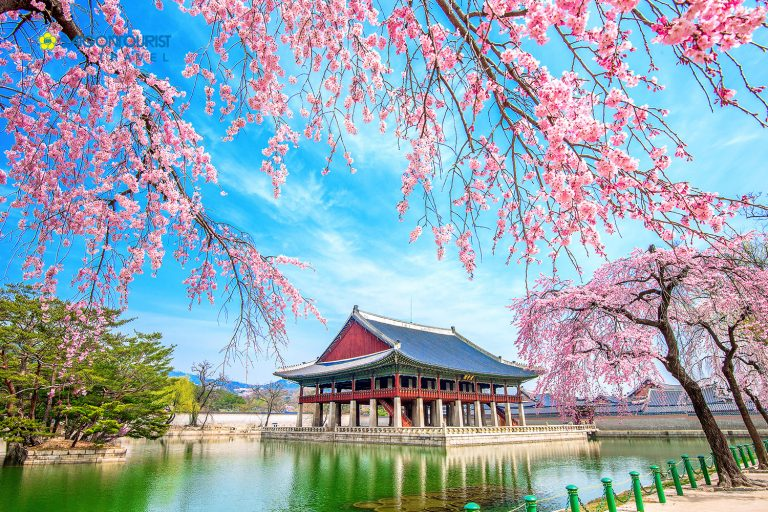 Chuyển phát nhanh từ Cần Thơ đi Hàn Quốc siêu tiết kiệm
