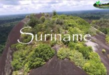 Chuyen phat nhanh tu Can Tho di Suriname