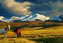 Gửi hàng lẻ từ Cần Thơ đi Mongolia bằng đường biển giá cực rẻ