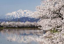 chuyển phát nhanh đi Niigata