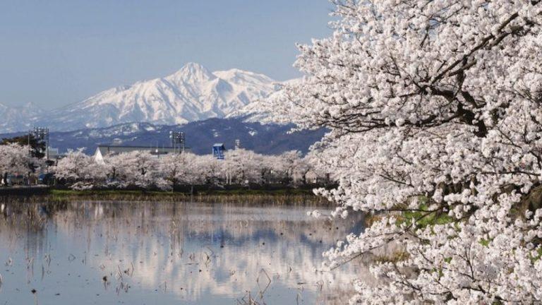 Chuyển phát nhanh từ Cần Thơ đi Niigata (Japan) giá tốt nhất