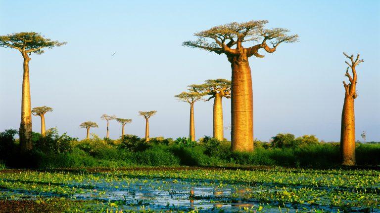 Chuyển phát nhanh từ Cần Thơ đi Madagascar uy tín, giá rẻ!