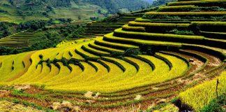 Vận chuyển đường bộ Cần Thơ đi Lào Cai