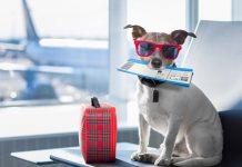 Dịch vụ vận chuyển - xuất nhập cảnh thú cưng