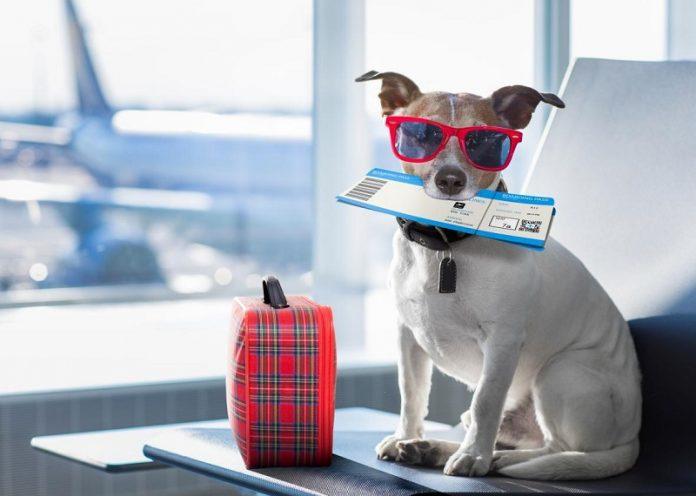 Dịch vụ vận chuyển thú cưng bằng máy bay
